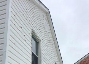 Raymore Hail Damaged Asphalt Shingles